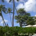 2008_hawaii_halekulani_christmas_184