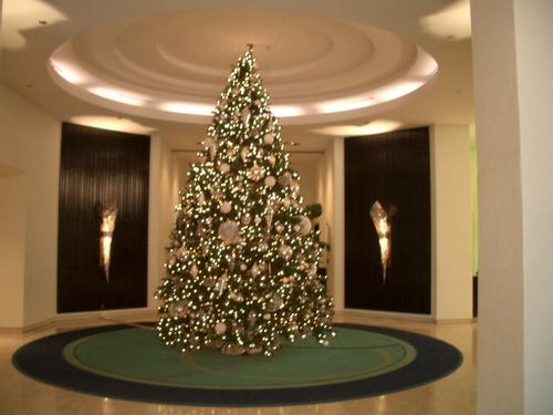 ワイキキパークホテルのツリー