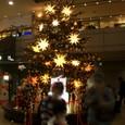成田のツリー